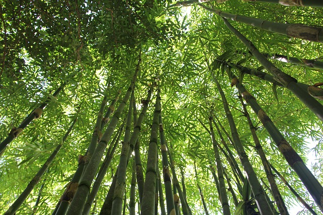 bamboo-566450_640.jpg